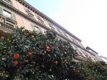 Und auf der Via XX Septembre: Mandarinenbäume :D