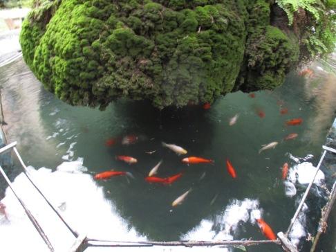 ein paar Goldfische im Brunnen
