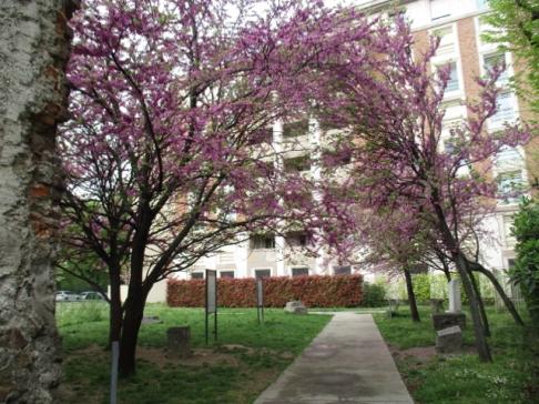 Eingang zum PArk gesäumt von Kirschblüten