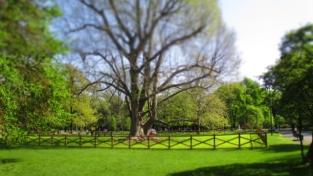 Ein wunderschöner großer Baum