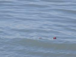 ... einige Rosen im Wasser