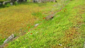 Wunderschöne Frühlingswiese