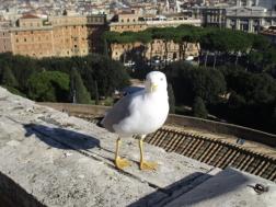 Ein Albatross schaut vorbei