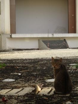 Das Kätzchen ist wohl der einzige Zuschauer zu dieser Jahreszeit