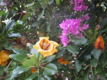 hier blühen die Blüten auch im Dezember