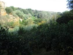 Zitrusgarten