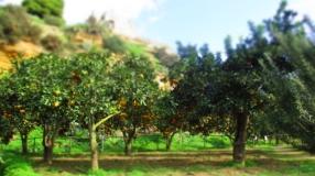 Zitrusplantagen
