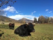 Aosta_3792
