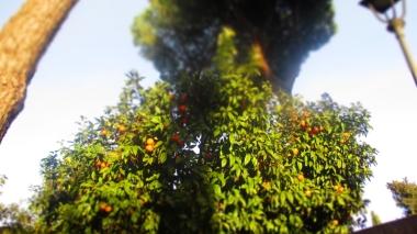 Orangen überall